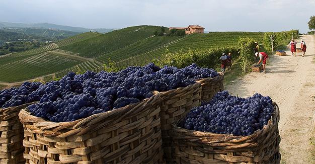 Le vie Eataliane del vino