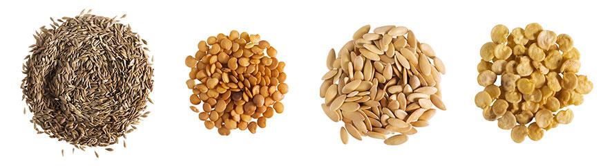 I semi della biodiversità