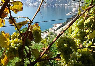 Vini Eroici