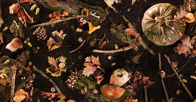 C'era una volta il bosco, Eataly ti racconta l'autunno.