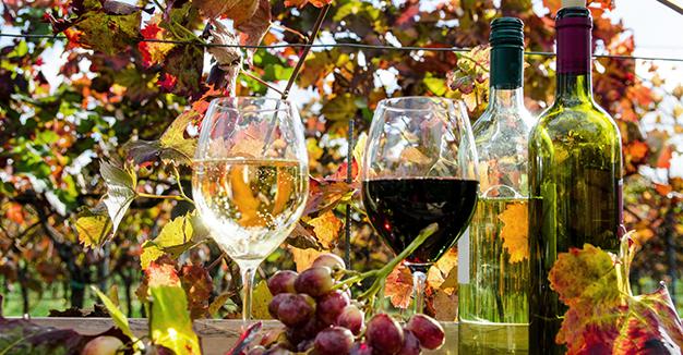 Il mondo del vino - Ecco i cibi da portare sempre con te.