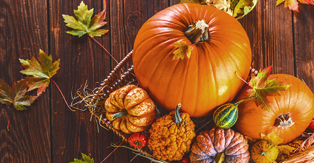 Le offerte del mese - Le promozioni speciali per il mese di ottobre.