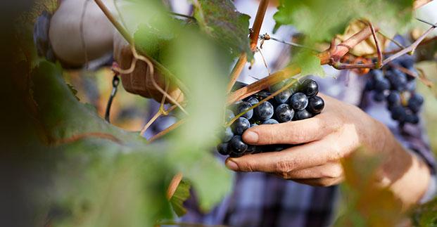 I Vignaioli Indipendenti - Per dei vini con un forte legame con il territorio.