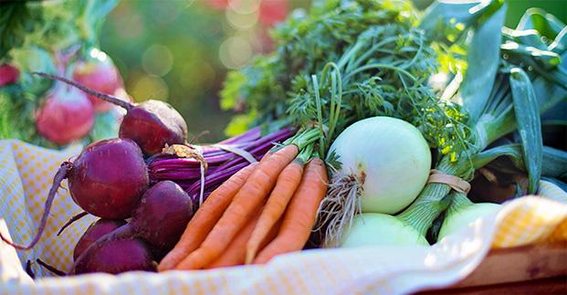 La migliore verdura di stagione - Abbiamo introdotto prodotti a km 0. Buonissimi!